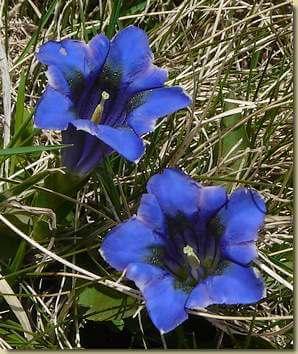 In valgrande i fiori e le piante del parco for I fiori della balsamina